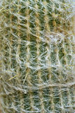 Close up photo of cactus Stock Photography