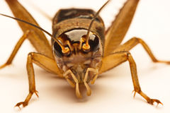 Close-up photo of the cricket gesture on the background.  Stock Photos