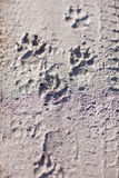 Close-up photo of dog traces paws in the mud Stock Images