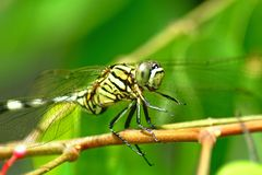 Close Up Photo of Dragonfly stock photos