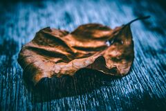 Close Up Photo of Dried Leaf Royalty Free Stock Photo
