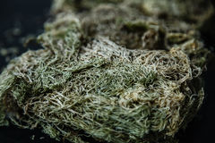 Close-up photo of dried sphagnum moss. Stock photo. Royalty Free Stock Photo