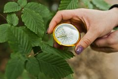 Close-up photo of female hands with compass next to a tree branc stock image