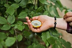 Close-up photo of female hands with compass next to a tree branc royalty free stock image