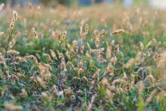 Close up photo of field royalty free stock photo