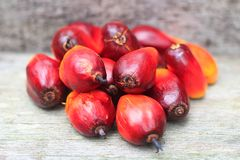 Close up photo of fresh oil palm seed. Oil palm seed, farm, agriculture, comodity Stock Photos