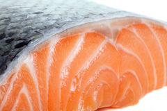Close up photo of fresh salmon Stock Photography