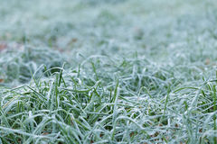 Close up photo of frosty morning grass Royalty Free Stock Photography