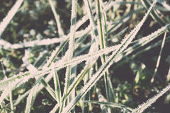 Close up photo of frosty morning grass, chilling morning Stock Photography