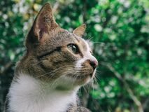 Close Up Photo of Gray and White Tabby Cat Royalty Free Stock Images