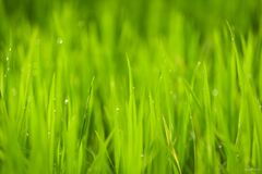 Close Up Photo of Green Grass Under Sunny Sky during Daytime Royalty Free Stock Photo