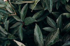 Close-up Photo of Green Leafed Plant Stock Photos