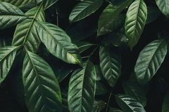 Close-up Photo of Green Leafed Plant stock photography