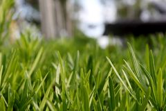 Close-up Photo of Green Leafed Plants stock photography