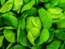 Close-up Photo Of Green Leafed Plants stock image