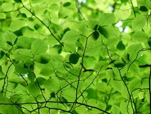 Close Up Photo of Green Leaves Royalty Free Stock Image