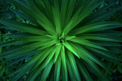 Close Up Photo of Green Linear Plant Stock Photo