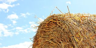 Close Up Photo of Hay Stock Image