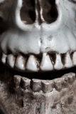 Close-up photo of the human skull Stock Photography