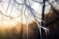 Icy tree branch on a cold winter day Stock Photo