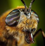 Close-Up Photo Of Insect Royalty Free Stock Photography