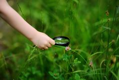 Close-up photo of kid exploring nature with magnifying glass. Little boy looking at tree with magnifier. Summer activity for inquisitive child Stock Images