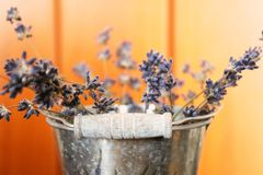 Close up photo of a lavender in the can royalty free stock photos