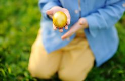 Close-up photo of little boy hunting for easter egg in spring park on Easter day. Cute little child celebrating feast outdoors royalty free stock photo