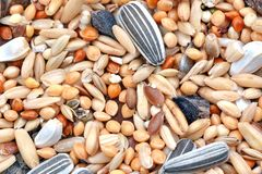 Seeds. Close-up photo with a lot of different seeds royalty free stock photography