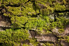 Close-up photo of mossy tree trunk. Old bark Stock Image