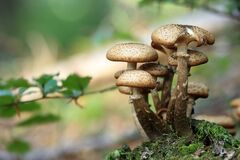 Close Up Photo of Mushroom during Daytime Royalty Free Stock Images