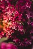 Close Up Photo of Pink Petaled Flower Stock Photos