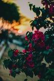 Close Up Photo of Pink Petaled Flowers stock photos