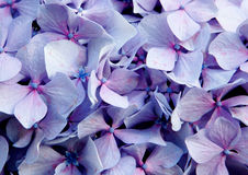 Close up photo of purple flower Royalty Free Stock Photos