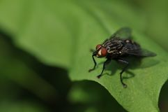 Close Up Photo of Red and Black Fly Royalty Free Stock Photos
