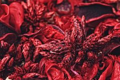 Close-up photo of colorful scented potpourri. Close-up photo of red scented potpourri selective focus royalty free stock image