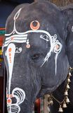 Close up photo of  sacred elephant eye Stock Photography