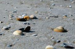 Close-up Photo of Seashells Stock Photo