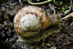 Snail on the forest road royalty free stock images