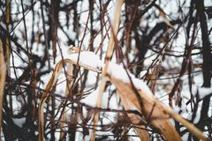 Close-up Photo of Snow on Dried Leaf stock photography