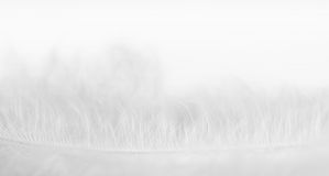 Close-up photo of softness white feather Stock Images