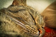 Close Up Photo of Tabby Cat Stock Photo