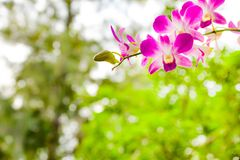 Close up photo of tree with flowers orchid air root on surface w. Ith lens flare sun light on background Royalty Free Stock Photo