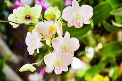 Close up photo of tree with flowers orchid air root on surface w. Ith lens flare sun light on background Royalty Free Stock Image