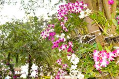 Close up photo of tree with flowers orchid air root on surface w. Ith lens flare sun light on background Stock Photography