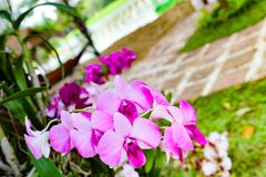 Close up photo of tree with flowers orchid air root on surface w. Ith lens flare sun light on background Stock Image