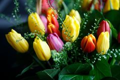 Close-up photo of tulip bouquet, colorful flowers, spring mood. Close-up mcro photo of tulip bouquet, colorful flowers, spring mood Royalty Free Stock Photo