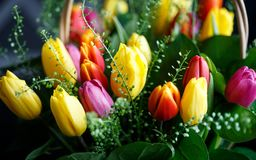 Close-up photo of tulip bouquet, colorful flowers, spring mood. Close-up mcro photo of tulip bouquet, colorful flowers, spring mood Stock Photos