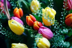 Close-up photo of tulip bouquet, colorful flowers, spring mood. Close-up mcro photo of tulip bouquet, colorful flowers, spring mood Stock Photo