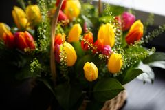 Close-up photo of tulip bouquet, colorful flowers, spring mood. Close-up mcro photo of tulip bouquet, colorful flowers, spring mood Stock Image